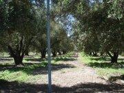 Excelente finca rústica con olivos