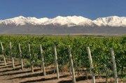 bodega de vinos Exportando sus marcas