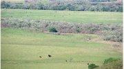 Finca ganadera y agrícola