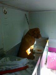 vendo_negocio_de_peluqueria_canina_movil_y_veterinaria_13965376192.jpg