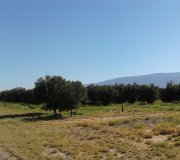 Vendo Campo con 360 Has. de Olivos en Producción