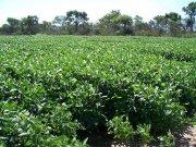 500 - 1000 - 1500 has agricolas