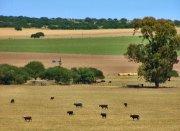 Empresa Agropecuaria - Corredora de Granos