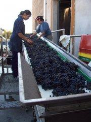 se busca inversor para inversion en bodegas vitivinicolas en Argentina. Mendoza vinos Malbec