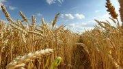 Inversor/para Agricultura en Argentina